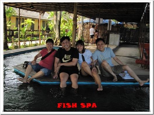 fish spa 1