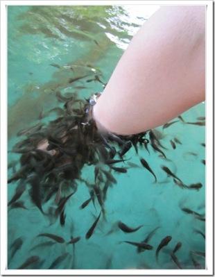 fish spa 6