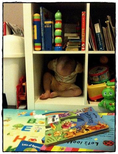 in the shelf